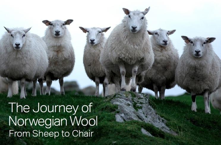 sheepies_01.jpg