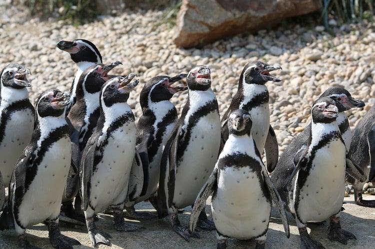 penguin-2549842_1280.jpg