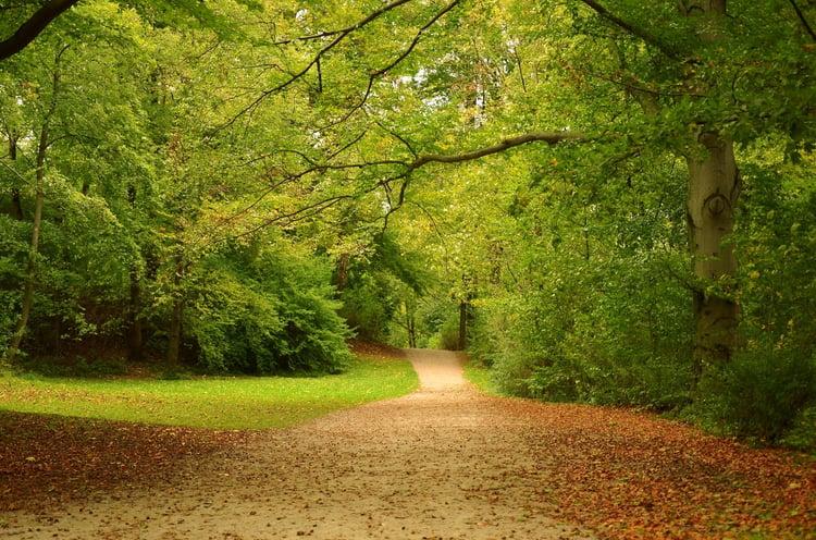 Germany_-_Munich_-_English_Garden_(Englischer_Garten)_-_panoramio.jpg