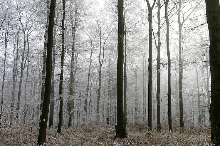 Grey can be a peaceful colour, as reflected by this serene woodland